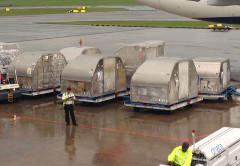 "Cargo ""passengers"" ready to be loaded"